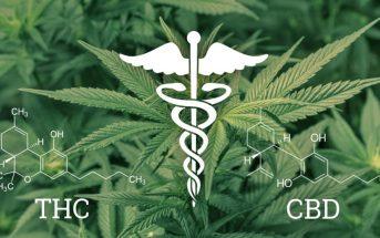 Cannabinoïde : quelle est la différence entre CBD et THC ?