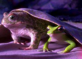 Garden Party : quand des grenouilles font la fête dans une villa