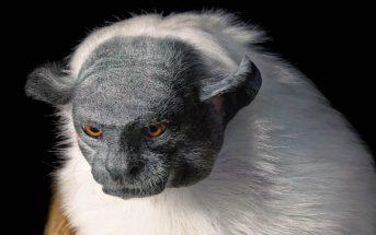 Les animaux en voie d'extinction immortalisés en photo