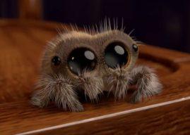 Découvrez Lucas, l'araignée animée la plus mignonne du web