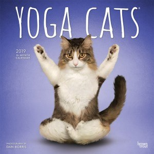 calendrier 2019 yoga cats