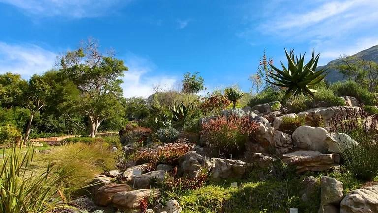 Le jardin botanique de Kirstenbosch de Afrique du Sd
