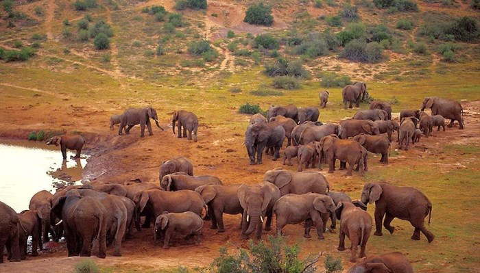 Le parc national des Éléphants d'Addo en Afrique du Sud