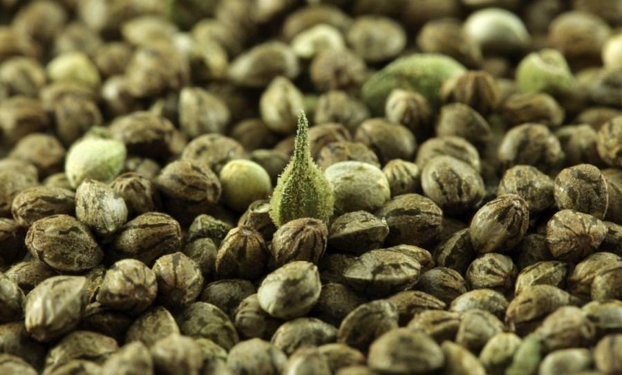 graines à vendre
