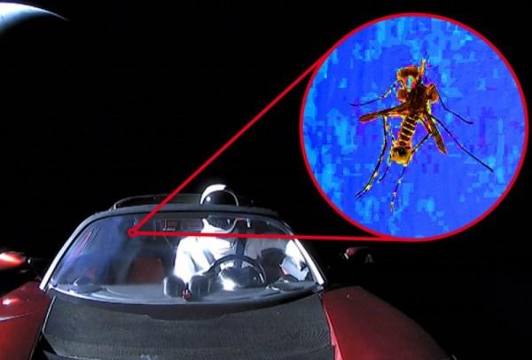 """Un """"moucheron"""" écrasé contre le pare-brise de la Tesla pose la question de la vie dans l'espace"""