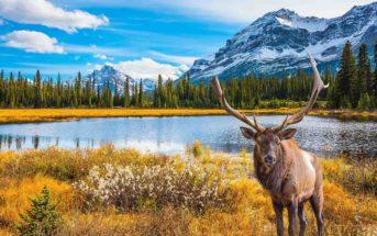 Comment bien préparer son voyage au Canada ?