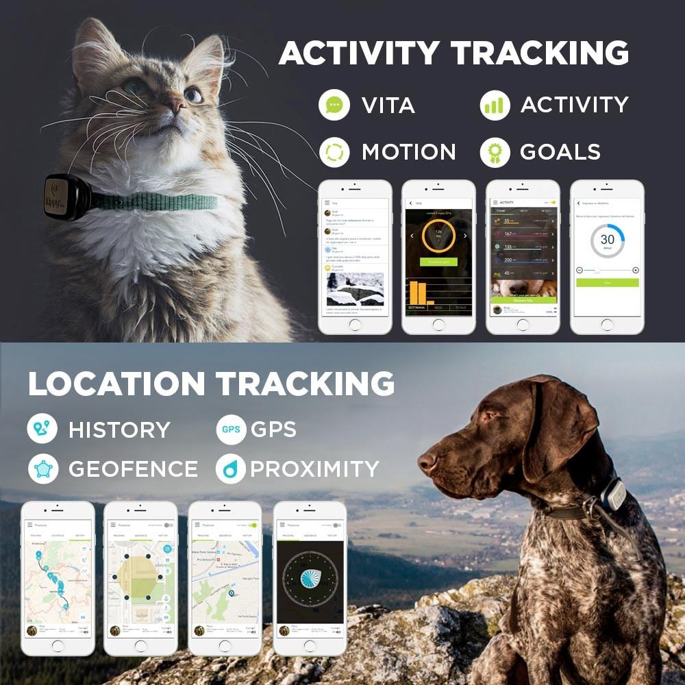 kippy vita : système GPS de localisation d'activité pour chien ou chat