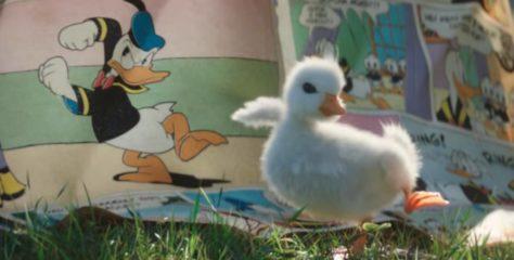 Le petit canard : la très mignonne pub Disneyland Paris