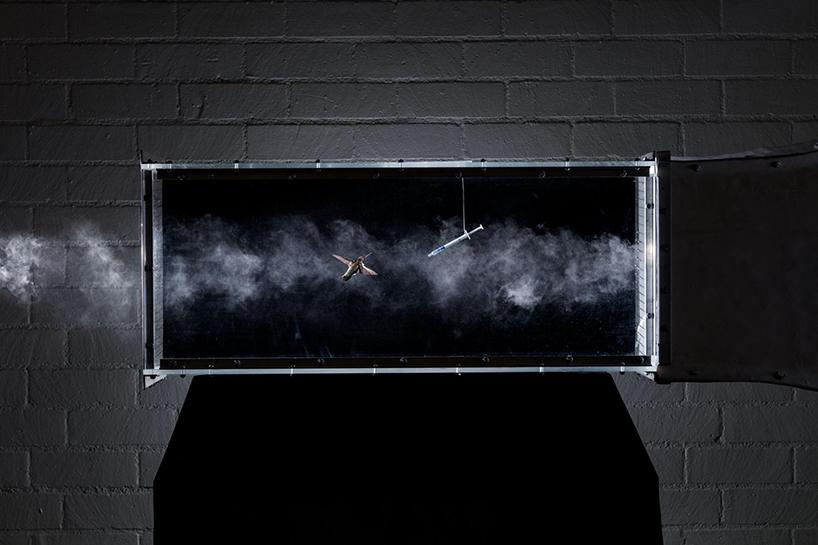 colibri dans une soufflerie