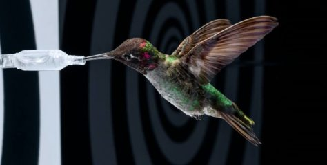 Cette vidéo d'un colibri filmé au ralenti est incroyable de beauté