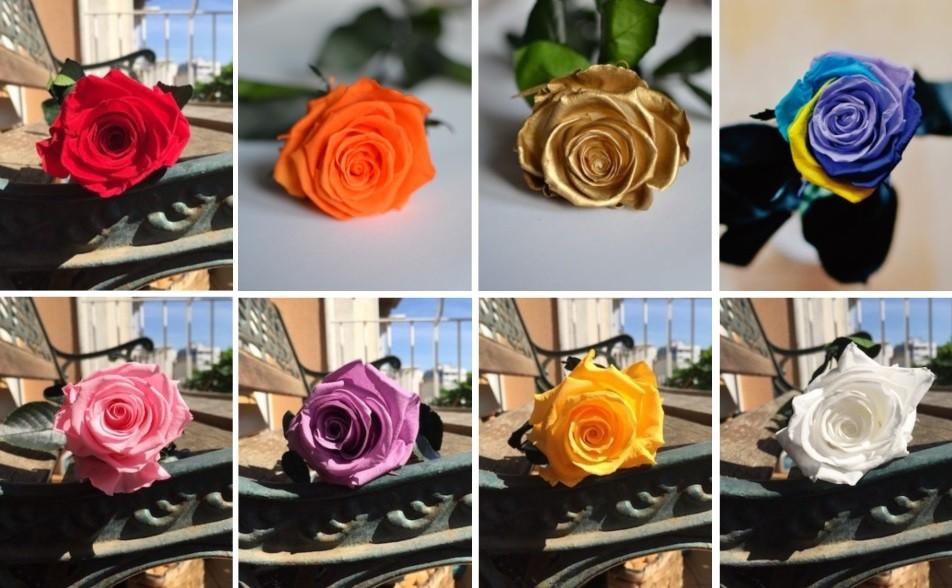 couleurs des roses éternelles