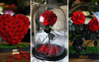 Roses éternelles : tout savoir sur la plus belle des fleurs stabilisées