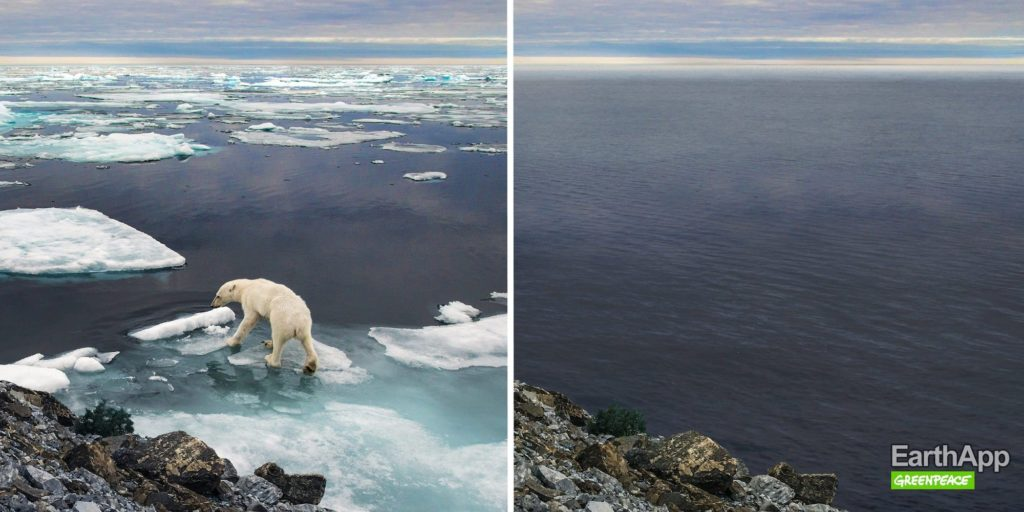 EarthApp : la disparition d'un ours polaire en Arctique
