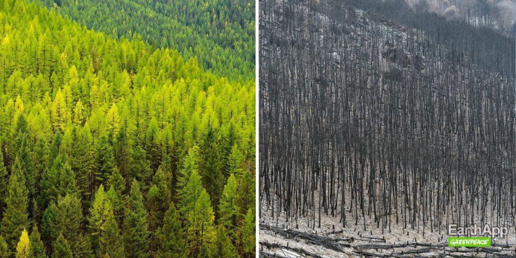 EarthApp : forêts de Sibérie