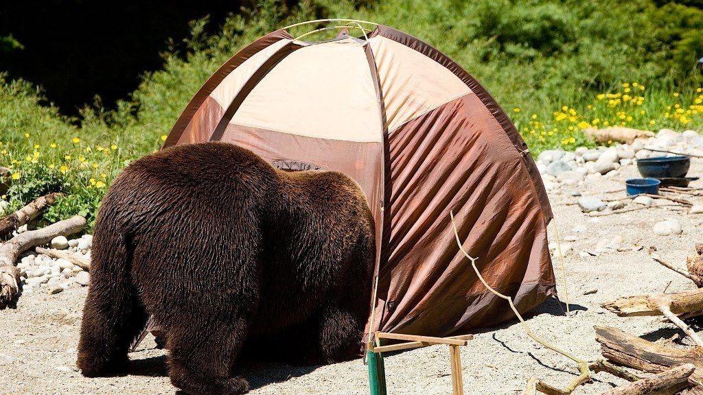 camping : un ours fouille dans une tente