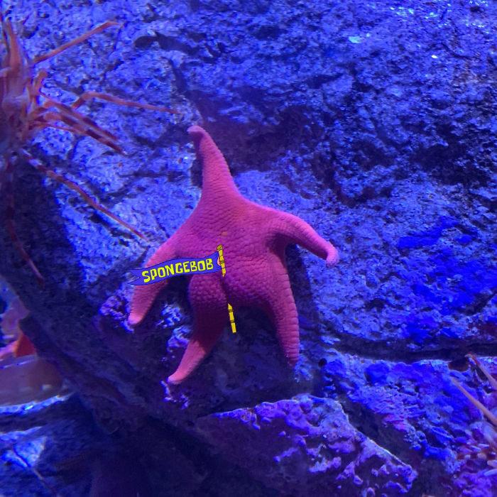 Détournement de l'étoile de mer qui ressemble à Patrick de Bob l'éponge - 01