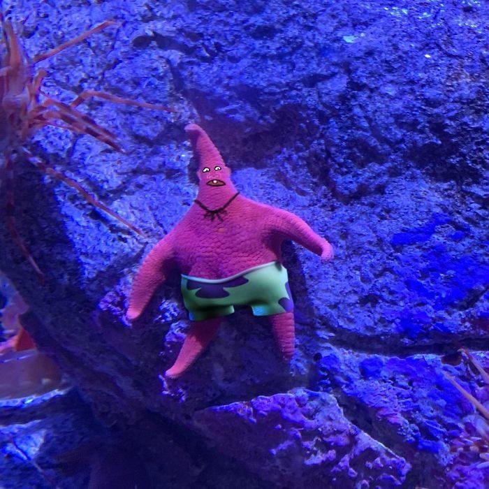 Détournement de l'étoile de mer qui ressemble à Patrick de Bob l'éponge - 03