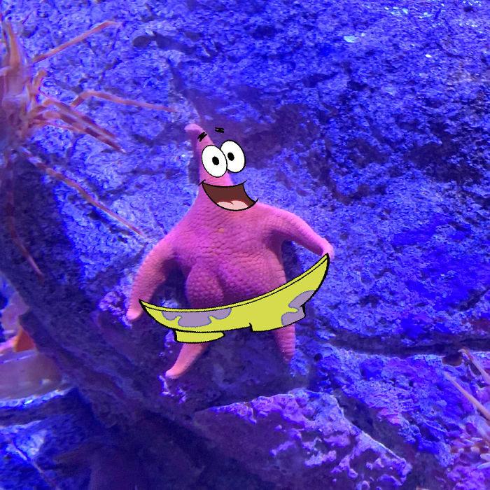 Détournement de l'étoile de mer qui ressemble à Patrick de Bob l'éponge - 04