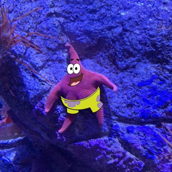 Détournement de l'étoile de mer qui ressemble à Patrick de Bob l'éponge - 05