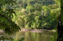 vue de la forêt amazonienne du Brésil