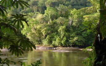 Brésil : cet été, participez gratuitement à la reforestation de l'Amazonie avec Ecosia !