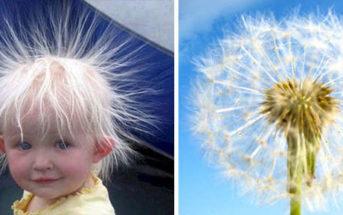Hilarant : 13 choses totalement différentes qui se ressemblent étrangement !