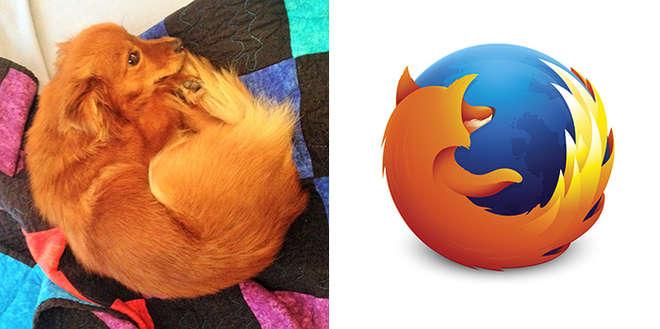 chien qui ressemble au logo Firefox