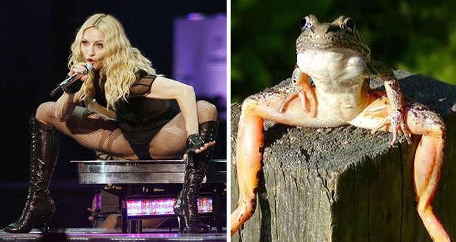 Madonna écarte les jambes comme une grenouille