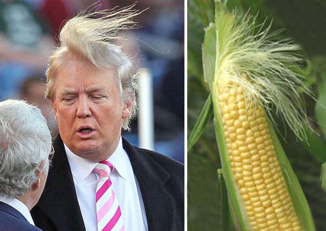 Donald Trump et sa coupe de cheveux épi de maïs