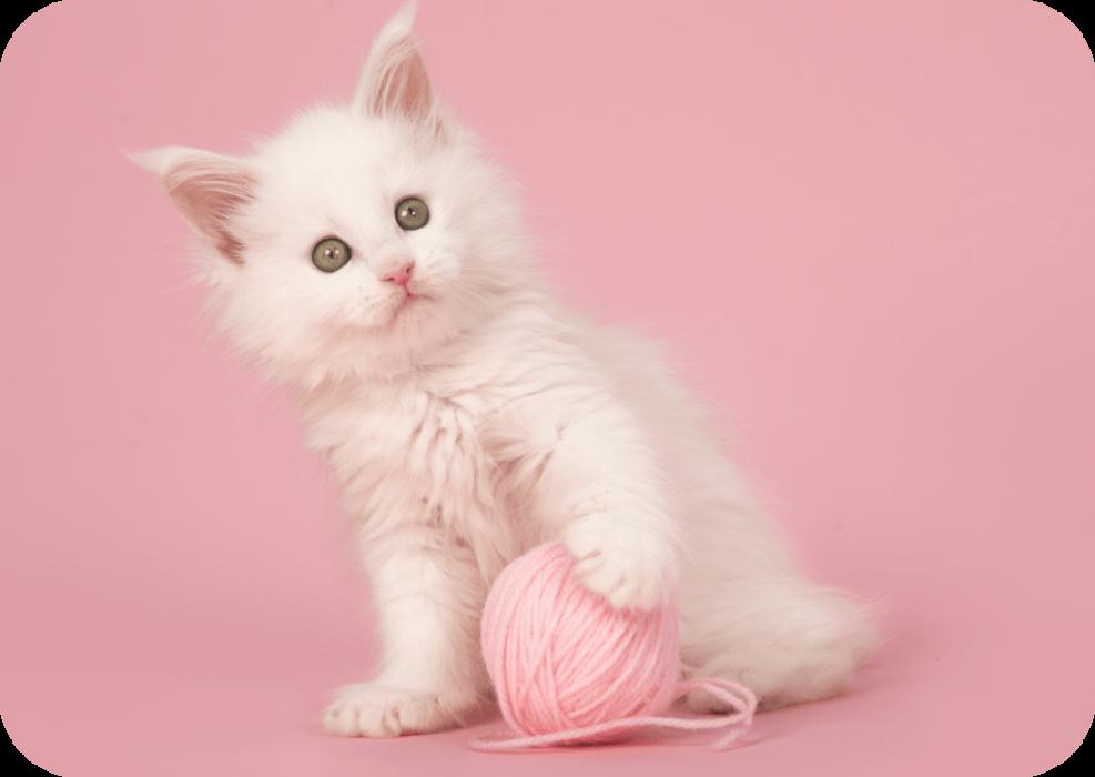 chaton mignon avec une pelotte