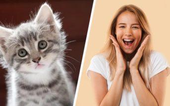Neurosciences : comment les chatons mignons piratent-ils nos cerveaux ?