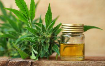 Cannabidiol : mieux connaitre l'huile de CBD et sa fabrication