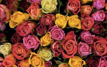 Langage des fleurs : signification des couleurs, variétés et nombre