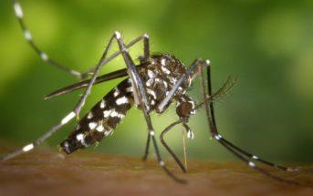 5 solutions naturelles pour soulager la piqûre du moustique tigre