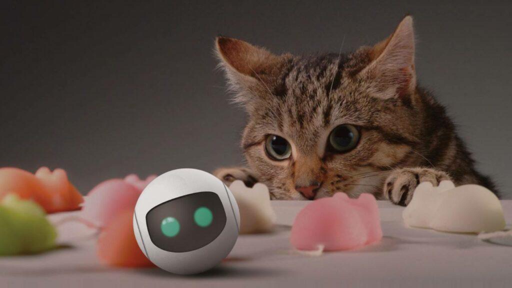 Rollycat : le jouet high-tech pour chat