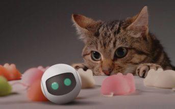 6 innovations technologiques pour nos amis les chats