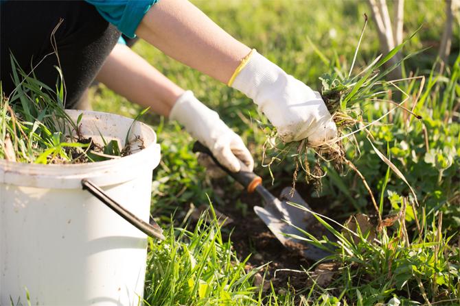 jardinage-maison