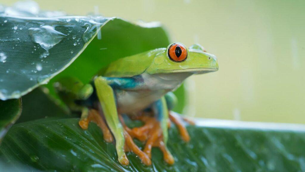 hébergement au Costa-Rica