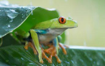Comment choisir un bon hébergement au Costa Rica ?
