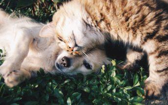 Quels sont les bienfaits d'un animal de compagnie sur nos enfants ?
