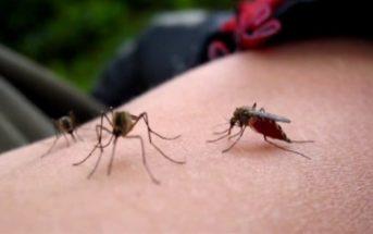 Pourquoi certaines personnes attirent les moustiques ?