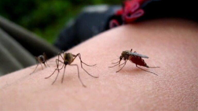 Certaines personnes attirent les moustiques