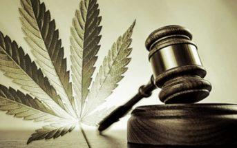 La France va-t-elle céder sur la question du cannabis légal ?