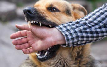 Mon chien m'a mordu : comment dois-je réagir ?