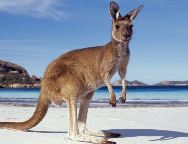 Working Holiday en Australie : les 10 lieux à voir absolument