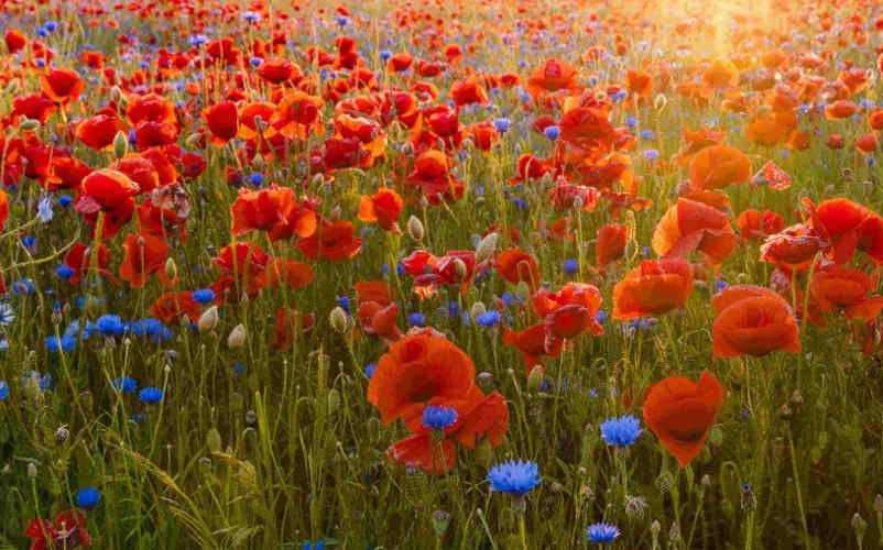 Des senteurs fleuries pour une touche de fraîcheur dans votre intérieur