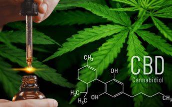 CBD : quels sont les effets du Cannabidiol ?