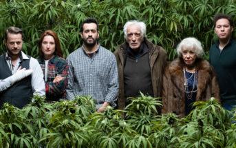 Top 10 des films indémodables sur le cannabis