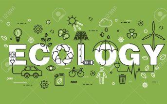 Top 4 des applications écologiques pour améliorer sa consommation