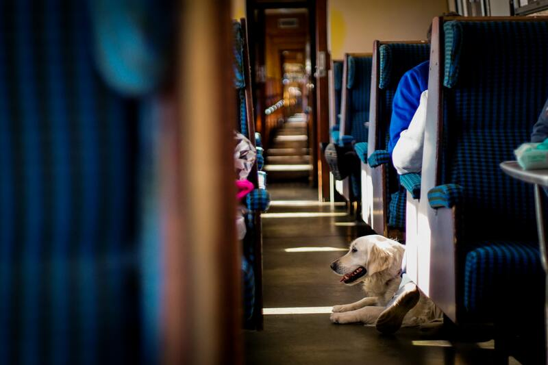 animaux de compagnie en ouigo train low cost